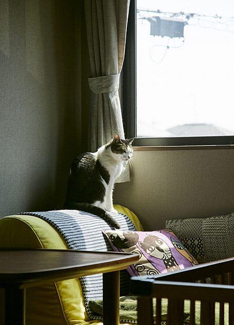 ペットと快適に暮らすための家づくりのヒント